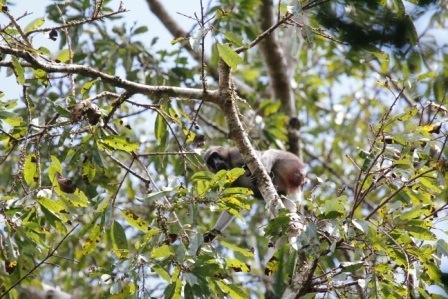 Elusive monkeys (6/6)
