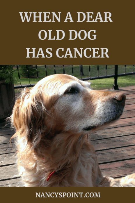 when a dear old dog has cancer #dogs #cancer #pets