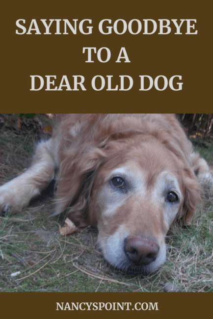 Saying Goodbye to a Dear Old Dog #grief #petloss #pets #loss