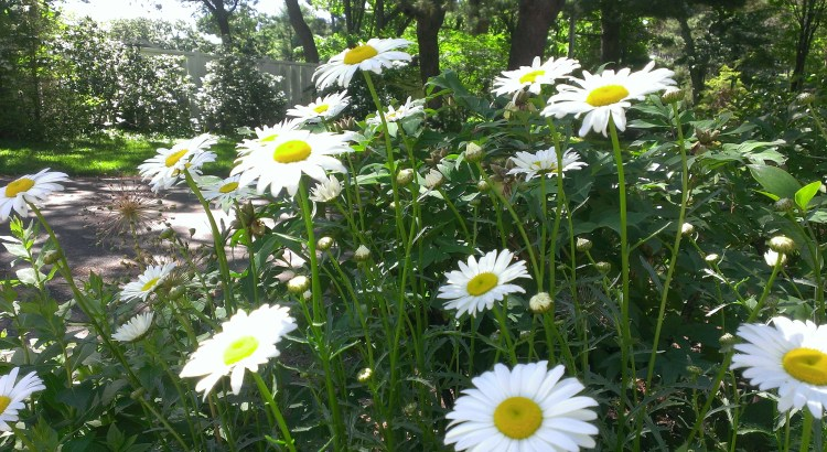 It's about more than transplanting daisies