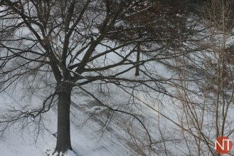 NT_Snowpocalypse2014_12of20