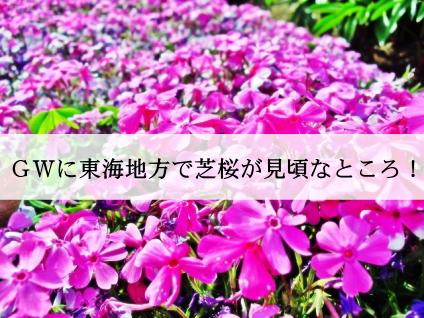 shibazakura10