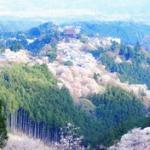 吉野山の桜の駐車場とアクセス情報!見頃と開花時期は?
