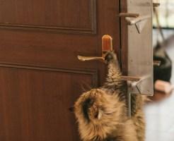 引っ越し時のネコの脱走防止