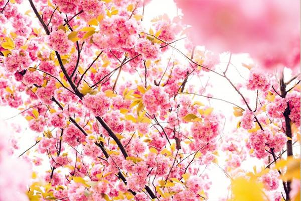 引越し 江戸川区 春