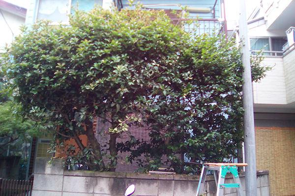 植木の剪定 江戸川区
