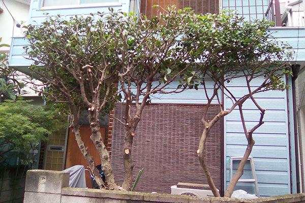 東京都で植木の剪定