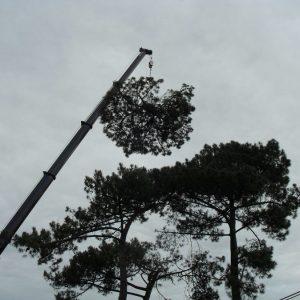 Abattage par démontage à la nacelle et grue en Pyrénées Atlantique 64 et Landes 40 4180 - ECHEGARAY Ñaño élagage