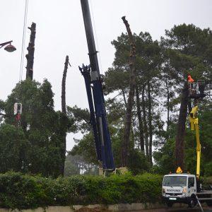 Abattage par démontage à la nacelle et grue en Pyrénées Atlantique 64 et Landes 40 995-2 - ECHEGARAY Ñaño élagage