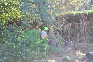 Abattage mécanique en Pyrénées Atlantique 64 et Landes 40 55 - ECHEGARAY Ñaño élagage