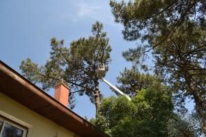 Abattage par démontage à la nacelle et grue en Pyrénées Atlantique 64 et Landes 40 869 - ECHEGARAY Ñaño élagage