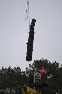 Abattage par démontage à la nacelle et grue en Pyrénées Atlantique 64 et Landes 40 992 - ECHEGARAY Ñaño élagage
