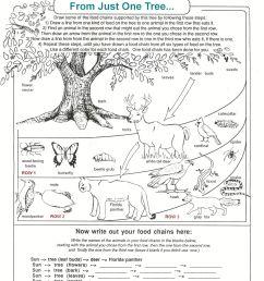 Seek And Finds   Preschool Education Fun   Fun Worksheets [ 2170 x 1656 Pixel ]