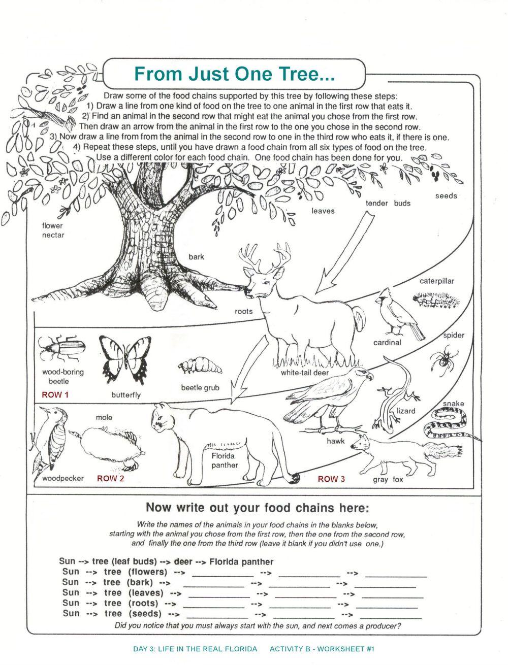 medium resolution of Seek And Finds   Preschool Education Fun   Fun Worksheets