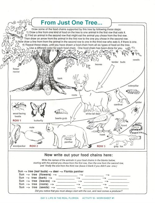 small resolution of Seek And Finds   Preschool Education Fun   Fun Worksheets