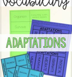 Animal Adaptations Activity And Interactive Notebook Worksheets on Best  Worksheets Collection 5577 [ 1274 x 736 Pixel ]