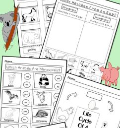 Animal Adaptations Activity And Interactive Notebook Worksheets on Best  Worksheets Collection 5577 [ 1840 x 720 Pixel ]