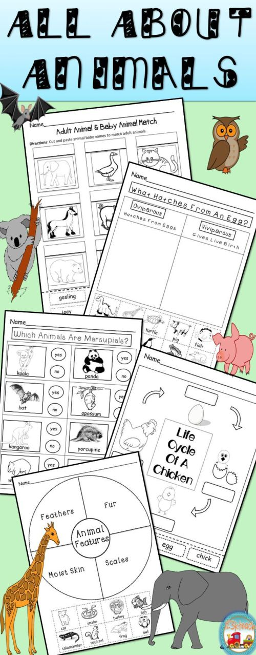 small resolution of Animal Adaptations Activity And Interactive Notebook Worksheets on Best  Worksheets Collection 5577