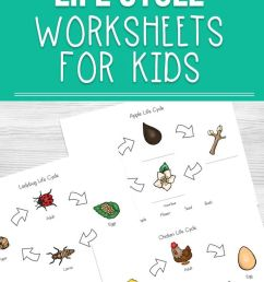 Life Cycle Worksheets For Kids   Homeschool Resources   Science on Best  Worksheets Collection 7096 [ 1135 x 735 Pixel ]