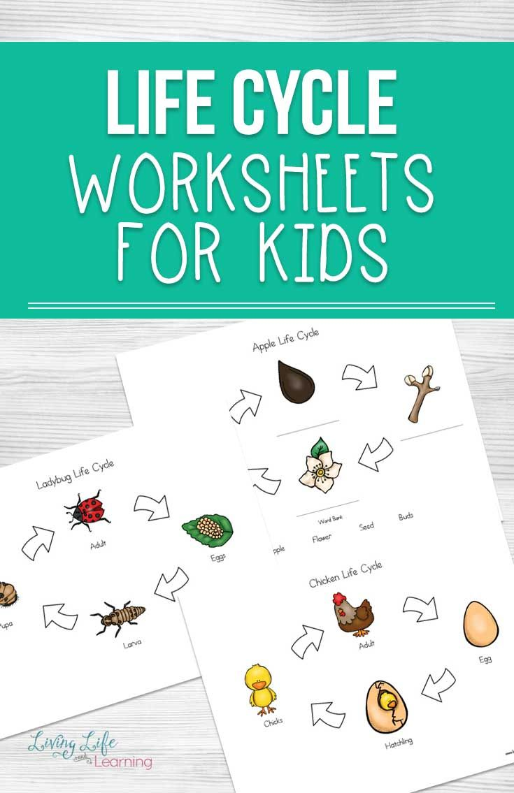 hight resolution of Life Cycle Worksheets For Kids   Homeschool Resources   Science on Best  Worksheets Collection 7096