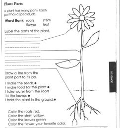 1st Grade Science Worksheets   Picking Apart Plants - People on Best  Worksheets Collection 8608 [ 1113 x 810 Pixel ]