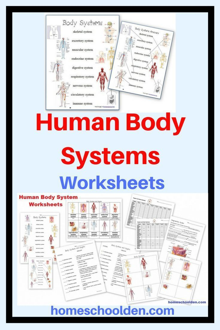 hight resolution of Human Body Worksheets And Notebook Pages Including Systems Matching on Best  Worksheets Collection 2973