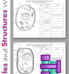 5 Best 7th Grade Cell Worksheets images on Best Worksheets Collection [ 1472 x 736 Pixel ]