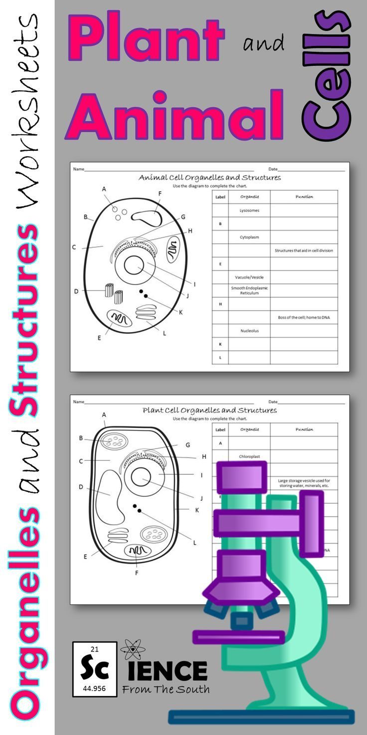 hight resolution of 5 Best 7th Grade Cell Worksheets images on Best Worksheets Collection
