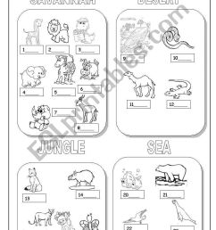 9 Best Animal Habitats Worksheets images on Best Worksheets Collection [ 1389 x 838 Pixel ]
