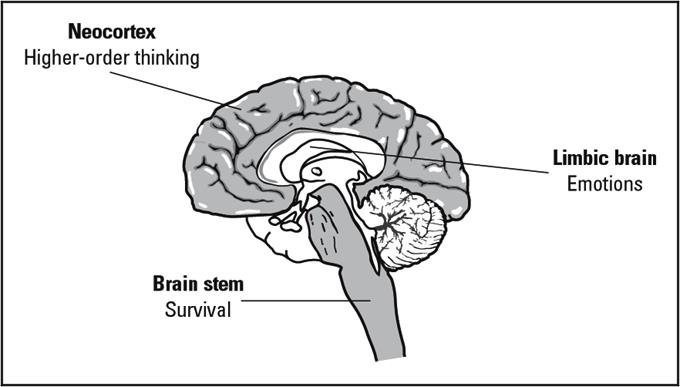 The many layers of the Neocortex