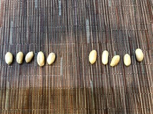 ライフ 大粒ピーナッツとピーナッツのサイズの比較