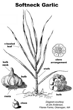 Plant Growth Diagram, Plant, Free Engine Image For User