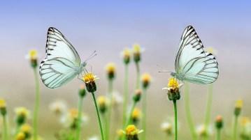 life butterfly nantygreens