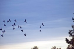 Freedom - Birds flying free
