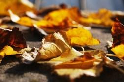 bare - leaves dry orange