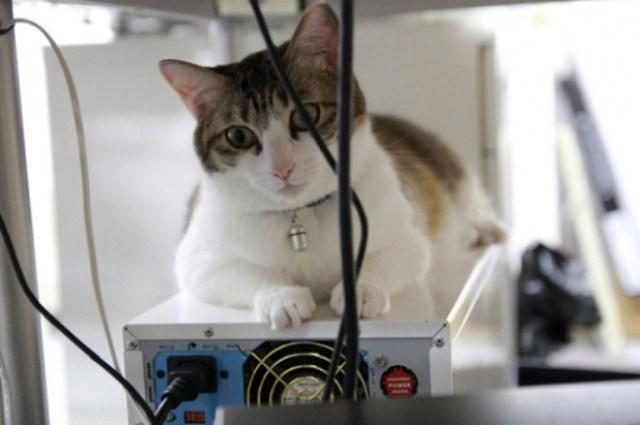 Кошки как средство повышения производительности труда - это круто