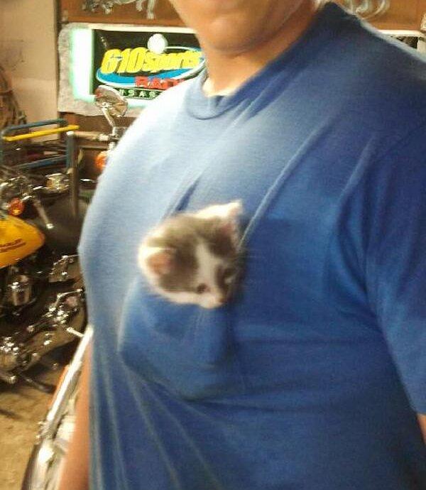 a.baa-mini-kitten-in-the-pocket-of