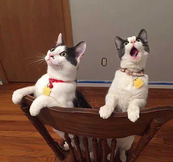Эти невероятные кошки!