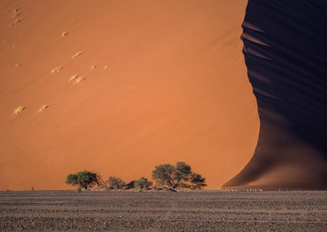 Фотоконкурс National Geographic 2015