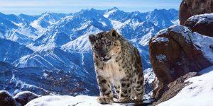 Лучшие снимки природы от фотографов BBC