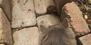 Бурундук против кота? Неожиданное продолжение
