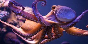 Какие животные на нашей планете самые умные