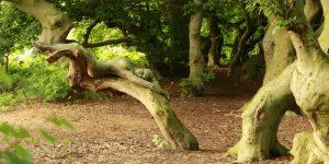 Найди голую девушку в кустах, или «Искусство и природа»