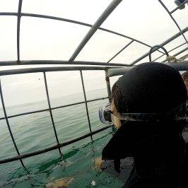 Vista de dentro da gaiola por cima da água, Ike de costas.