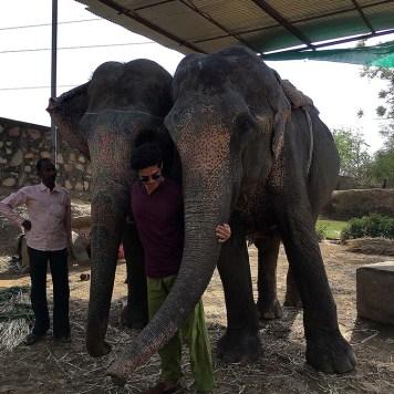 india_jaipur_elephant_village_nao_e_caro_viajar_vila_dos_elefantes_passeio_abraco
