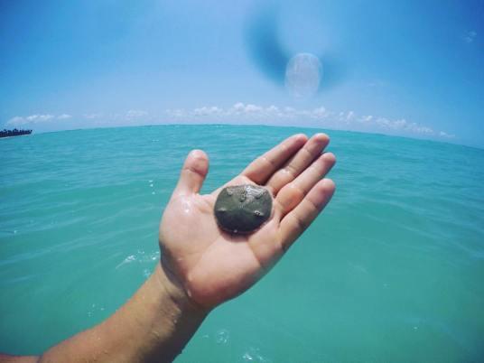 Bolacha do Mar