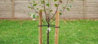 Ландыши как сажать и ухаживать. Ландыши — миниатюрное и изящное украшение сада