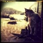 鞆の浦 猫