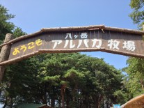 Yatsugatake Alpaca Farm