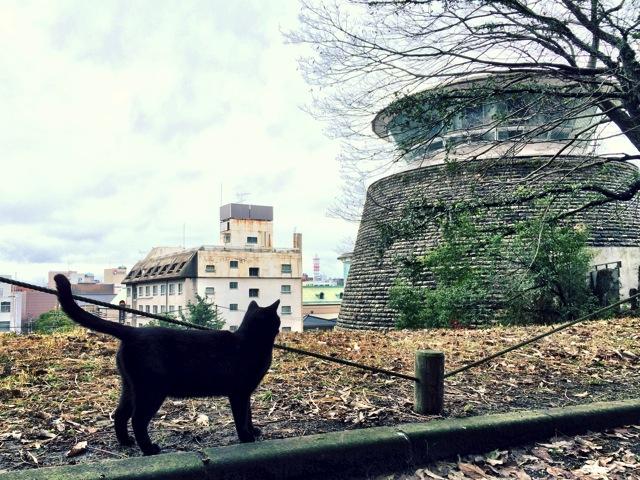 Black Cat in Kagoshima